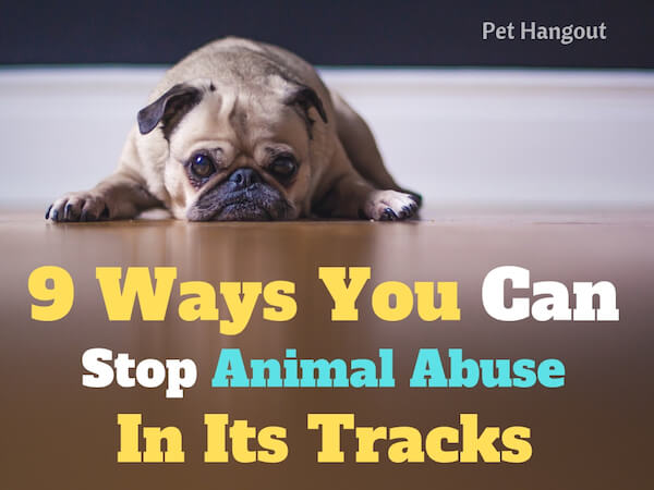 9 ways to stop animal abuse in its tracks.