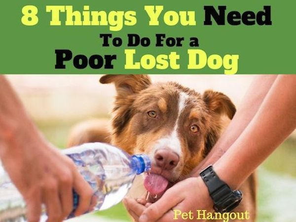 8 Things You Need To Do for a poor lost dog.