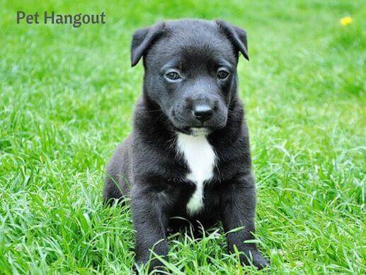 Black puppy in the grass