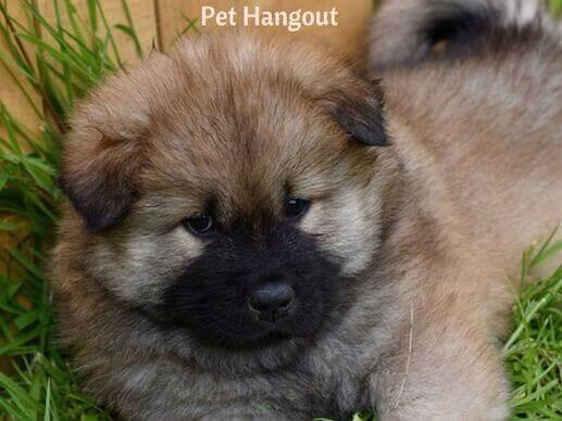 Fluffy puppy.