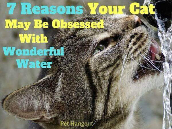 7 reasons your cat may be obsessed with wonderful water.