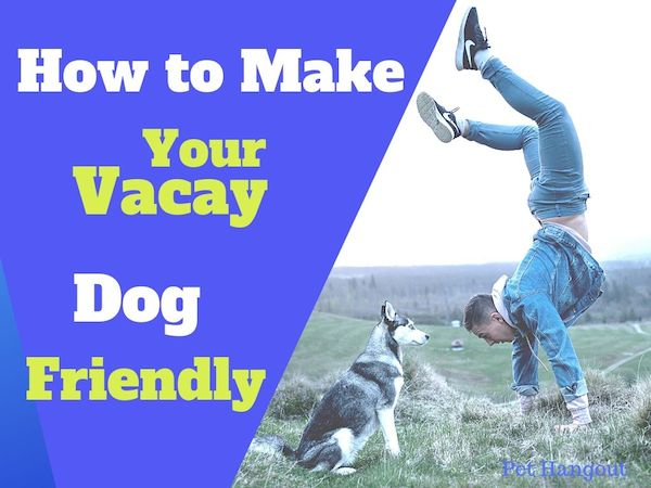 How to make your vacay dog friendly.