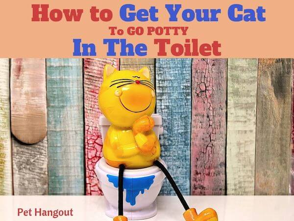 How to get your cat to go potty in the toilet.