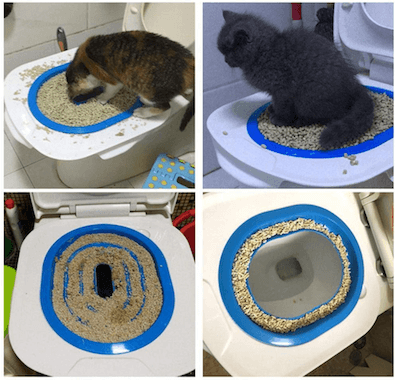 Progression of kitty using the toilet training system.